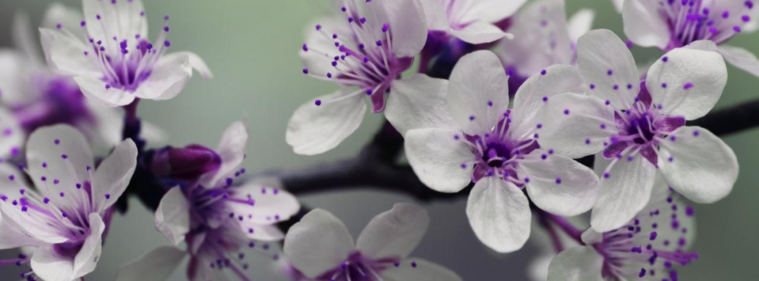 white-and-purple-petal-flower-focus-photography-132474